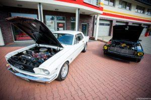 Mustang Rybnik biały