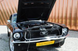 Mustang wypożyczalnia Rascar
